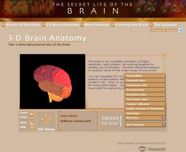 3d brain anatomy 1 Eğer siz de beynin yapısını merak ediyor, görmek istiyorsanız, aşağıdaki linki tıklamanız yeterli. Ayrıca biraz İngilizce ile hangi bölümün ne iş yaptığını da öğrenebilirsiniz. Eğer siz de beynin yapısını merak ediyor, görmek istiyorsanız, aşağıdaki linki tıklamanız yeterli. Ayrıca biraz İngilizce ile hangi bölümün ne iş yaptığını da öğrenebilirsiniz.