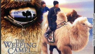 Photo of Ağlayan Deve'nin Öyküsü | The Story of the Weeping Camel