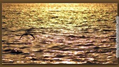 Photo of Altın Dalgalar | Golden Waves