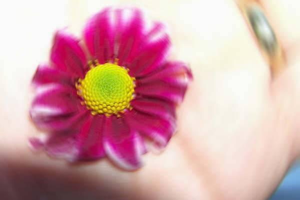 avcumdacicek 1 Bir sabah kalktım ve bir baktım avcumda çiçek açmış. Bir sabah kalktım ve bir baktım avcumda çiçek açmış.