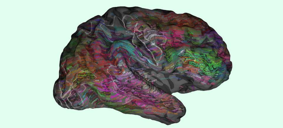 Beynimizde Kelimeler Nerede Saklanıyor? 3 Boyutlu Beyin Modelinde Görün
