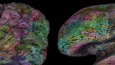 Photo of Beynimizde Kelimeler Nerede Saklanıyor? | 3 Boyutlu Beyin Modelinde Görün | Beyin Sözlüğü