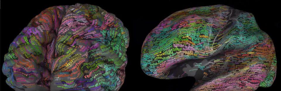 Beynimizde Kelimeler Nerede Saklanıyor? 3 Boyutlu Beyin Modelinde Görün | Beyin Sözlüğü