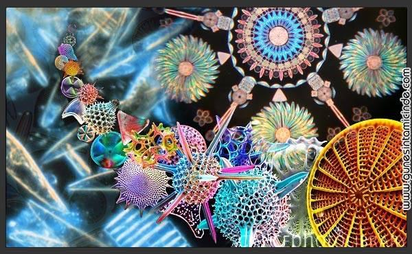 diatomlar 1 Mikro boyutlarda cam görünümlü mücevherimsi canlılar. Her biri birbirinden farklı yaklaşık 16.000 çeşit alg türü. Parmaklarımı onlara dokunmak ister gibi hayranlıkla sayfada gezdirdiğimi ve elimde dergi bulduğum herkese tek tek gösterdiğimi hatırlarım. Mikro boyutlarda cam görünümlü mücevherimsi canlılar. Her biri birbirinden farklı yaklaşık 16.000 çeşit alg türü. Parmaklarımı onlara dokunmak ister gibi hayranlıkla sayfada gezdirdiğimi ve elimde dergi bulduğum herkese tek tek gösterdiğimi hatırlarım.