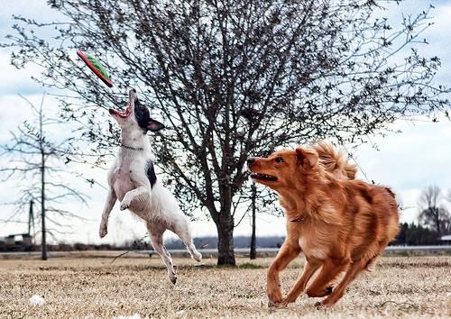 Süleyman Sönmez - Güneşin Tam İçinde frizbi2 Frizbi, Çılgın Uçan Disk | Frisbee Eğlence Oyun  UFO Uçan Turnuca spor Oyunları Oyun Nedir Nasıl Oynanır Köpek Genç Fırlat Frizbi Frisbee Disk Büyük çocuk Çılgın Aile   Süleyman Sönmez - Güneşin Tam İçinde fredericmorrison Frizbi, Çılgın Uçan Disk | Frisbee Eğlence Oyun  UFO Uçan Turnuca spor Oyunları Oyun Nedir Nasıl Oynanır Köpek Genç Fırlat Frizbi Frisbee Disk Büyük çocuk Çılgın Aile   Süleyman Sönmez - Güneşin Tam İçinde frizbiefc Frizbi, Çılgın Uçan Disk | Frisbee Eğlence Oyun  UFO Uçan Turnuca spor Oyunları Oyun Nedir Nasıl Oynanır Köpek Genç Fırlat Frizbi Frisbee Disk Büyük çocuk Çılgın Aile   Süleyman Sönmez - Güneşin Tam İçinde fresbeecollection Frizbi, Çılgın Uçan Disk | Frisbee Eğlence Oyun  UFO Uçan Turnuca spor Oyunları Oyun Nedir Nasıl Oynanır Köpek Genç Fırlat Frizbi Frisbee Disk Büyük çocuk Çılgın Aile   Süleyman Sönmez - Güneşin Tam İçinde frizbimucadelesporu Frizbi, Çılgın Uçan Disk | Frisbee Eğlence Oyun  UFO Uçan Turnuca spor Oyunları Oyun Nedir Nasıl Oynanır Köpek Genç Fırlat Frizbi Frisbee Disk Büyük çocuk Çılgın Aile   Süleyman Sönmez - Güneşin Tam İçinde frizbiacilis Frizbi, Çılgın Uçan Disk | Frisbee Eğlence Oyun  UFO Uçan Turnuca spor Oyunları Oyun Nedir Nasıl Oynanır Köpek Genç Fırlat Frizbi Frisbee Disk Büyük çocuk Çılgın Aile   Süleyman Sönmez - Güneşin Tam İçinde frizbiultimate Frizbi, Çılgın Uçan Disk | Frisbee Eğlence Oyun  UFO Uçan Turnuca spor Oyunları Oyun Nedir Nasıl Oynanır Köpek Genç Fırlat Frizbi Frisbee Disk Büyük çocuk Çılgın Aile   Süleyman Sönmez - Güneşin Tam İçinde frizbigolf Frizbi, Çılgın Uçan Disk | Frisbee Eğlence Oyun  UFO Uçan Turnuca spor Oyunları Oyun Nedir Nasıl Oynanır Köpek Genç Fırlat Frizbi Frisbee Disk Büyük çocuk Çılgın Aile   Süleyman Sönmez - Güneşin Tam İçinde frizbiserbest Frizbi, Çılgın Uçan Disk | Frisbee Eğlence Oyun  UFO Uçan Turnuca spor Oyunları Oyun Nedir Nasıl Oynanır Köpek Genç Fırlat Frizbi Frisbee Disk Büyük çocuk Çılgın Aile   Süleyman Sönmez - Gü