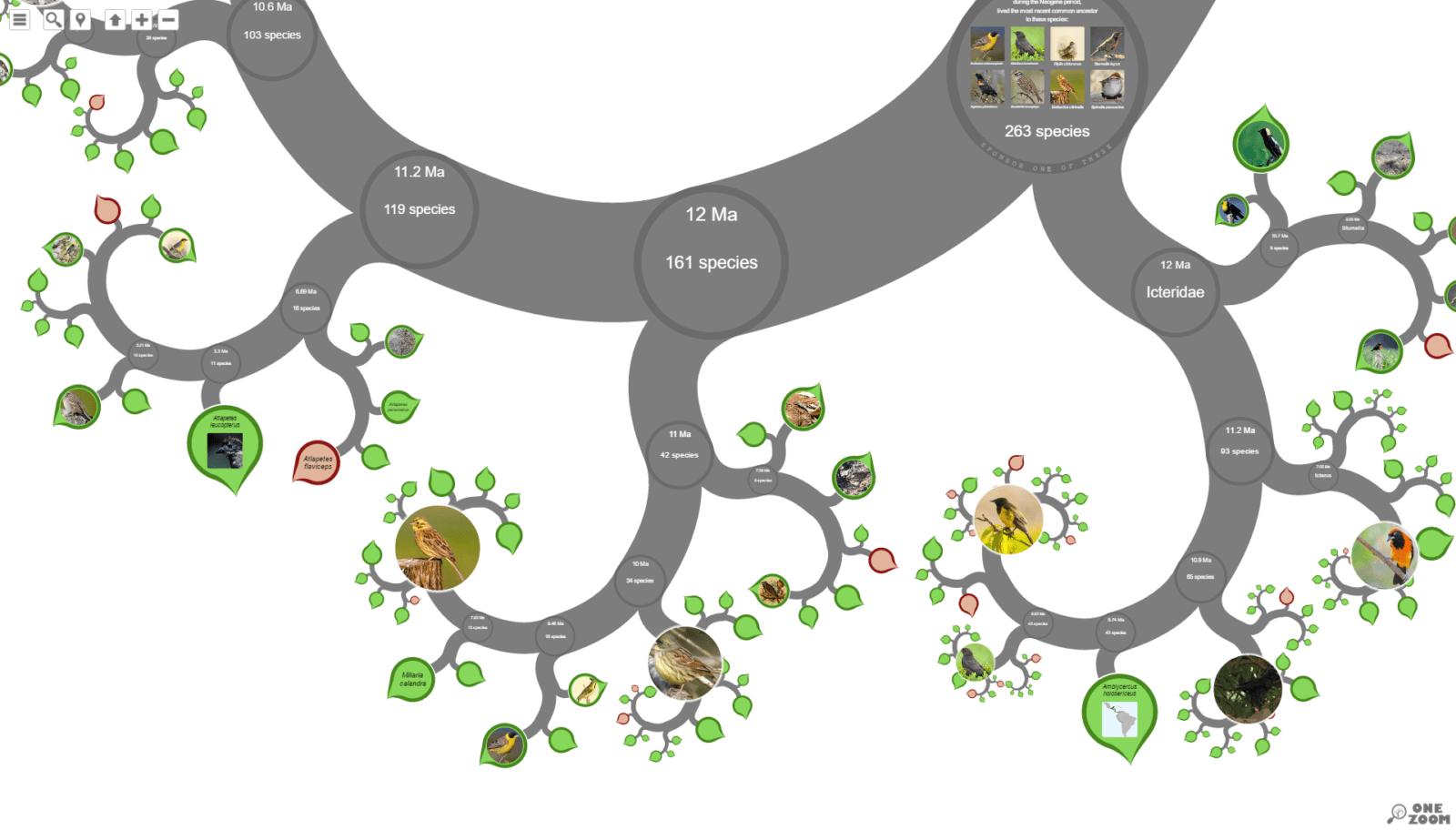 Süleyman Sönmez - Güneşin Tam İçinde hayatagaci2 Canlılar Alemini İnteraktif Hayat Ağaçlarıyla Tanıyalım - Biyoloji | Tree of Life Project - OneZoom Bilim ve Teknoloji Eğitim Eğitim Teknolojileri  Tree of Life Türler Sınıf OneZoom Fen Bilgisi Fen Cins Canlılar Alemi Biyoloji Alemler