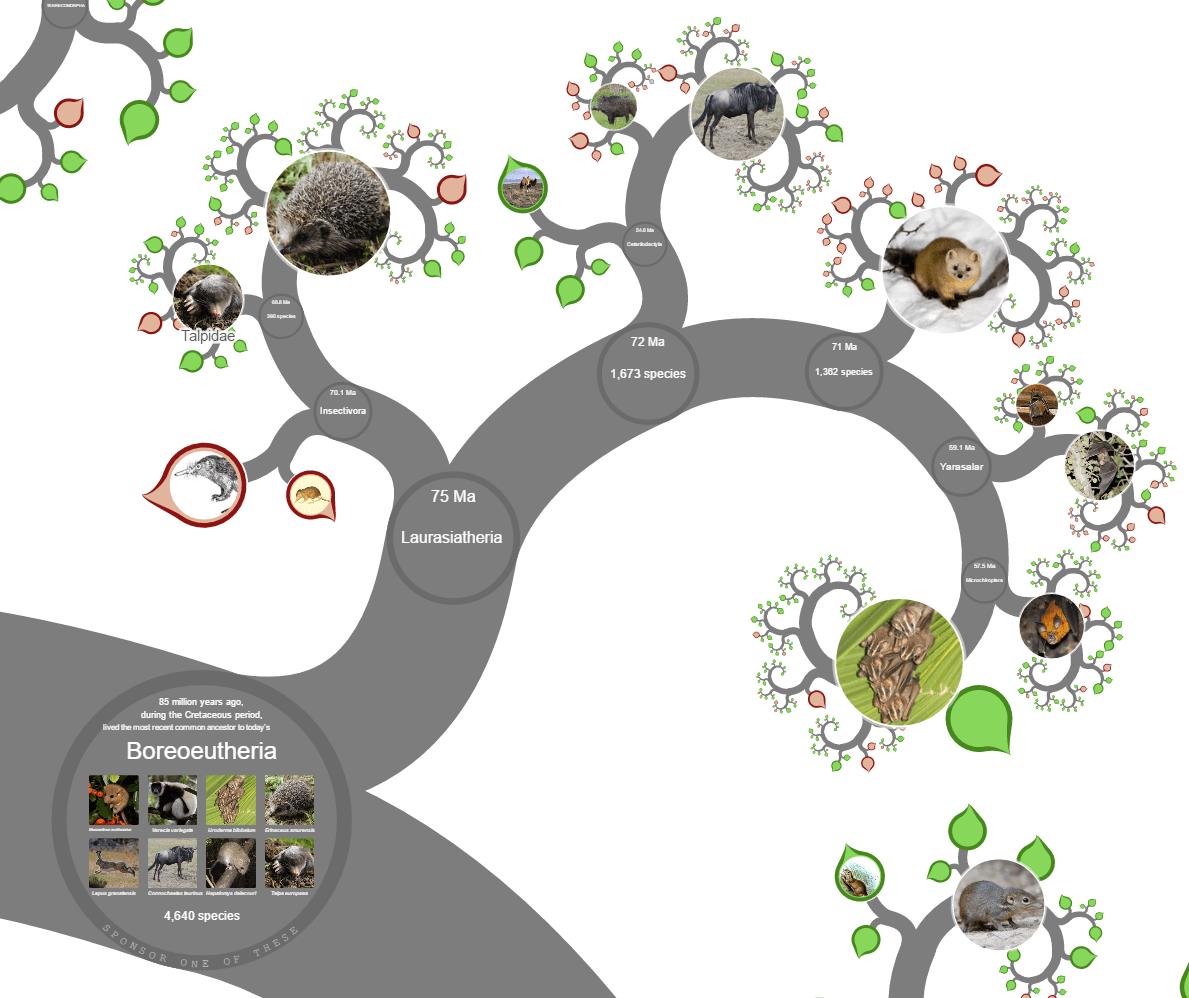 Süleyman Sönmez - Güneşin Tam İçinde hayatagaci2 Canlılar Alemini İnteraktif Hayat Ağaçlarıyla Tanıyalım - Biyoloji | Tree of Life Project - OneZoom Bilim ve Teknoloji Eğitim Eğitim Teknolojileri  Tree of Life Türler Sınıf OneZoom Fen Bilgisi Fen Cins Canlılar Alemi Biyoloji Alemler   Süleyman Sönmez - Güneşin Tam İçinde hayatagaci3 Canlılar Alemini İnteraktif Hayat Ağaçlarıyla Tanıyalım - Biyoloji | Tree of Life Project - OneZoom Bilim ve Teknoloji Eğitim Eğitim Teknolojileri  Tree of Life Türler Sınıf OneZoom Fen Bilgisi Fen Cins Canlılar Alemi Biyoloji Alemler