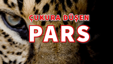 Photo of Çukura Düşen Pars – Ezop Masalı – Podcast