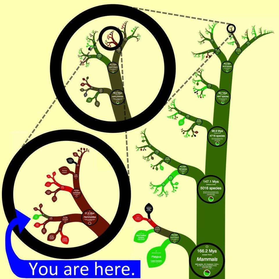 Süleyman Sönmez - Güneşin Tam İçinde hayatagaci2 Canlılar Alemini İnteraktif Hayat Ağaçlarıyla Tanıyalım - Biyoloji | Tree of Life Project - OneZoom Bilim ve Teknoloji Eğitim Eğitim Teknolojileri  Tree of Life Türler Sınıf OneZoom Fen Bilgisi Fen Cins Canlılar Alemi Biyoloji Alemler   Süleyman Sönmez - Güneşin Tam İçinde hayatagaci3 Canlılar Alemini İnteraktif Hayat Ağaçlarıyla Tanıyalım - Biyoloji | Tree of Life Project - OneZoom Bilim ve Teknoloji Eğitim Eğitim Teknolojileri  Tree of Life Türler Sınıf OneZoom Fen Bilgisi Fen Cins Canlılar Alemi Biyoloji Alemler   Süleyman Sönmez - Güneşin Tam İçinde striking-image2-960x960 Canlılar Alemini İnteraktif Hayat Ağaçlarıyla Tanıyalım - Biyoloji | Tree of Life Project - OneZoom Bilim ve Teknoloji Eğitim Eğitim Teknolojileri  Tree of Life Türler Sınıf OneZoom Fen Bilgisi Fen Cins Canlılar Alemi Biyoloji Alemler
