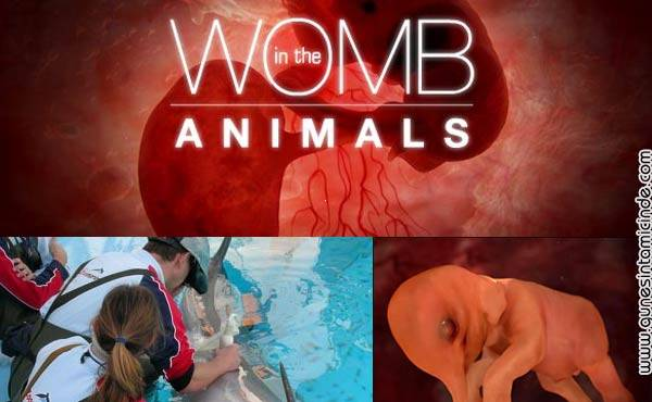 wombinanimals.jpg